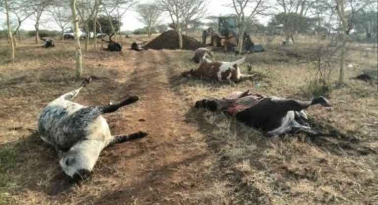 3 Farmers Allegedly Poison Friend's Cows
