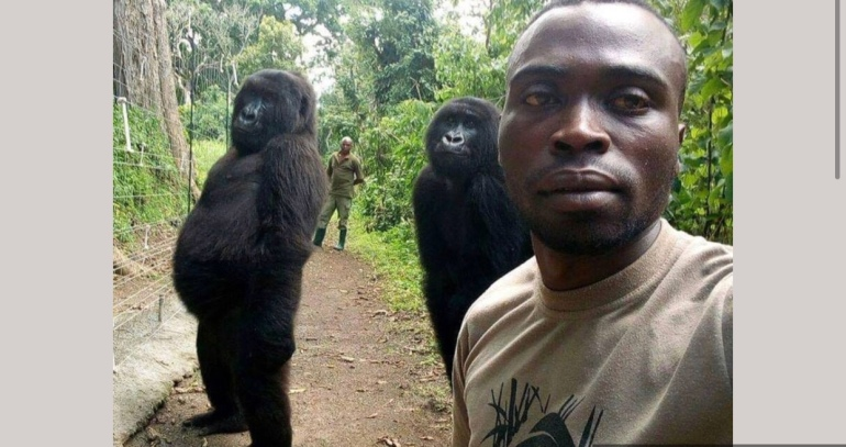 Gorillas Pose for selfie with his Rescuers